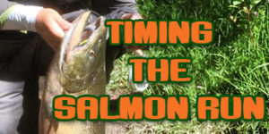 timing the salmon run feature