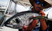 Getting Salty – Bonito, King Mackerel and Sharks in Florida