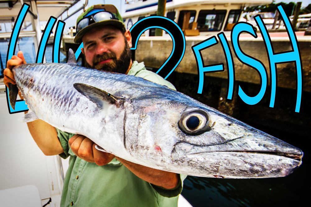 Live 2 Fish Getting Salty - Bonito, King Mackerel and Sharks in Florida Blogs Daniel Notarianni Saltwater Travel Video  sharks saltwater fishing Fishing bonito big fish