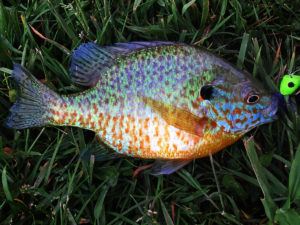 Live 2 Fish Home