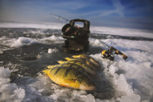 Lake Simcoe Perch and Vexilar