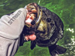 Live 2 Fish Live 2 Fish