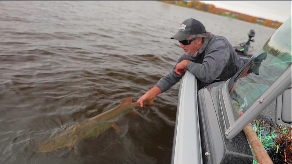 Live 2 Fish How To Properly Handle Musky Articles  Proper Musky Handling musky fishing Brent Bochek